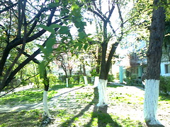 Fotografie28650 (chicore2011) Tags: littlepark residentialarea