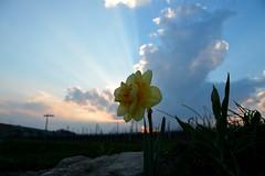 Flower Drift (Lilith-Luana) Tags: frühling blume wolke sonne licht sonnenstrahlen natur weinberge nature