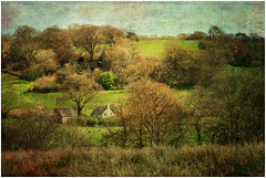 Pastoral Scene (tina777) Tags: pastoral scene landscape fields trees grass sky hedgerow hills cottage house sheep texture photoshop elements llanarthney wales