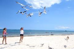 Feeding the birds (thomasgorman1) Tags: sand beach sea ocean seagulls gulls birds people women sky mexico