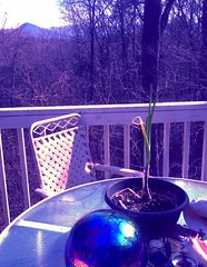 mornin (LauraSorrells) Tags: winter wild mountain home glass sunshine landscape one march chair solitude candle object shell naturallight altar growth fabric silence portal pinecone psychedelic volunteer planter emptiness tabletop iphone sharptop 2013 victoriangazingball