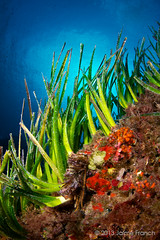 verde posidonia (I) (Jaime Franch) Tags: diving formentera buceo baleares falsocoral posidoniaoceanica puntagavina tokinaatx107dxfisheyeaf1017mmf3545 myriaporatruncata mediterraneo visemanafotografiasubmarinaformentera