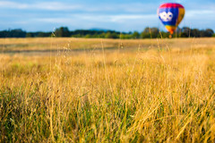 The Grassland (David Tao Photography) Tags: sky hot flying air balloon flight floating canberra grassland