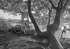 Bike under the bridge (rosshj) Tags: blackandwhite bw film monochrome analog 35mm pie blackwhite kodak tmax ishootfilm scan 35mmfilm tmax400 fm3a kodaktmax400 greyscale thelab beauphoto nikon primefilm nikon28mmf28ais fm3a nikon28mmais primefilmxe