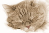 Plush (II) (gtncats) Tags: pet orangetabby selectivecolor catnapping greatphotographers topazlabs felinefaces photographyforrecreation