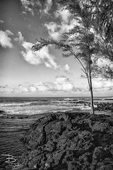 Standing Alone (debibuck) Tags: ocean travel sunset sea portrait beach nature water landscape photography hawaii waves photographer photos may lifestyle images adventure explore exotic pacificocean bigisland hilo onlocation oceanscape 2013 arnottslodge puhibay onekahakahabeach