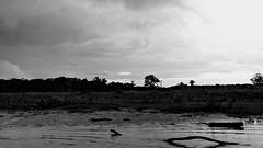 Cenas de Tarauac (Acre, Brasil) 09 (Nanda Melonio) Tags: brasil amazon acre tarauac riomuru