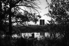 Peering Through the Trees (Miss Marisa Renee) Tags: trees summer blackandwhite sunlight nature water grass june digital canon reflections pond scenery colorado pretty framed branches scenic bank shore frame silos digitalphotography greyscale grassy 2014 naturalarea canon400d marisarenee june2014 littletroutpond