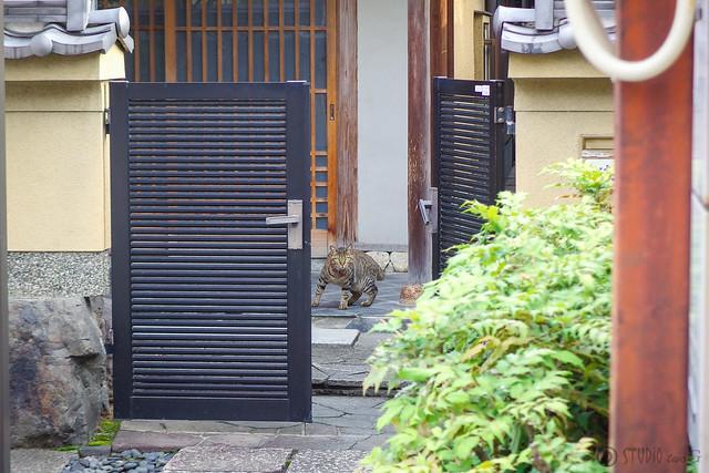 Today's Cat@2014-06-30