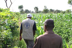 FAO support farmers (FAOemergencies) Tags: fao emergencies centralafricanrepublic agriculture africa conflict crisis women markets