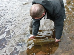 Returning (salmoferox) Tags: fish scotland fishing highland loch pike predator cr lure pikefishing catchandrelease catchrelease lurefishing deadbait deadbaiting fishinginscotland