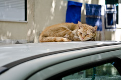 Sesta no carro (inFocusDCPhoto  Young Spanish photographer) Tags: street sleeping summer