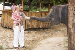 AD4A7694b (forum.linvoyage.com) Tags: wood baby elephant man men thailand sand hands small phuket