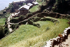 21-101 (ndpa / s. lundeen, archivist) Tags: nepal houses people house mountain color building film rural 35mm buildings village 21 path nick terraces trails trail mountainside nepalese 1970s hillside 1972 himalayas nepali dewolf terraced mountainvillage ruralvillage terracefarming nickdewolf photographbynickdewolf terracedhillside ruralnepal terracedfarmland reel21 hillyregion terracedmountainside