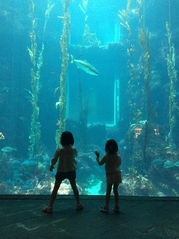 20140618 iTaiwan_Day4 海生館是我們的大遊樂場