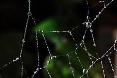 En la telaraa. (Victoria.....a secas.) Tags: macro reflections drops spiderweb gotas reflejos telaraa