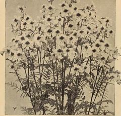 Anglų lietuvių žodynas. Žodis caraway seed reiškia kmynų sėklos lietuviškai.