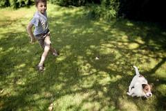 jouer (DEWEGGIS) Tags: dog chien green childhood garden jardin vert pelouse garon balle enfance piquenique distagont1435