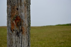 Solitary post (RHughes5) Tags: wood green grass clouds landscape outdoors view post ring lichen