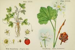Anglų lietuvių žodynas. Žodis cloudberry reiškia n. arktine tekše lietuviškai.