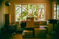 000044120033-1 (Puppy McSailor) Tags: shadow sun sunlight film window cat 35mm packing couch pack newhouse boxes movingday unpack movers movingin