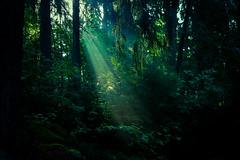 Aulanko (Tuomo Lindfors) Tags: sun forest suomi finland mets rayoflight aurinko hmeenlinna aulanko lusikkaniemi valonsde theacademytreealley aulangonjrvi aulangonpuistomets