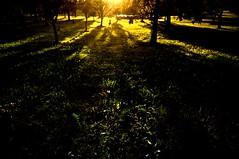 Light in the orchard (zeitdiamant) Tags: obersterreich kapelle hgel mhlviertel lembach hgellandschaft