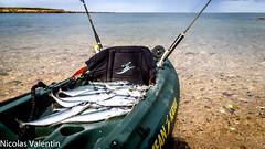Mackerel Quotas (Nicolas Valentin) Tags: morning sea mer beach mackerel scotland marine bravo scenery kayak scenic bleu kayaking magicdonkey kayakfishing kayakscotland kayakfishingscotland