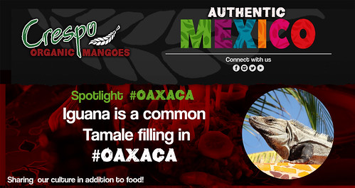 "Authentic Mexico Educators- Iguana Tamales • <a style=""font-size:0.8em;"" href=""http://www.flickr.com/photos/139081453@N03/32109832183/"" target=""_blank"">View on Flickr</a>"