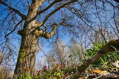 Oggi su per le colline (Gianni Armano) Tags: colli tortonesi 28 marzo 2017 sole caldo primavera alberi colline natura colori bellezza fioritura foto gianni armano photo flickr grandangolo