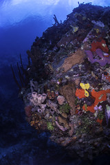 orange and yellow encrusting sponges- (b.campbell65) Tags: dominica animal background beautiful blue colorful coral creature dive island isolated marine natural nature ocean reef sand sea seascape travel tropical underwater water wild wildlife