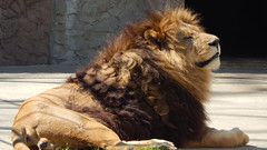 At the zoo (II) (fmihayi) Tags: zoo animals nature wild wildness