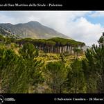 929_D8B_3483_bis_Bosco_di_San_Martino_delle_Scale thumbnail