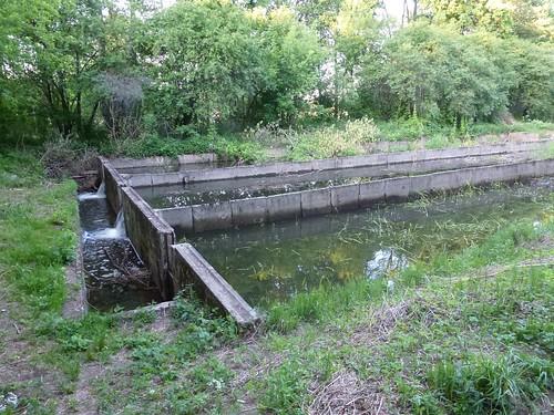 Dawne hodowla pstrąga w Tarachowiźnie na Świdrze