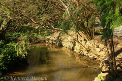 Tintern Wood (Ken Meegan) Tags: tinternwood tinternabbey saltmills cowexford ireland 742017