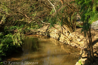 Tintern Wood
