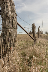 Down the Row (Crawford Canines) Tags: fence barbedwire fenceline woodposts repurposedwood iowa fields