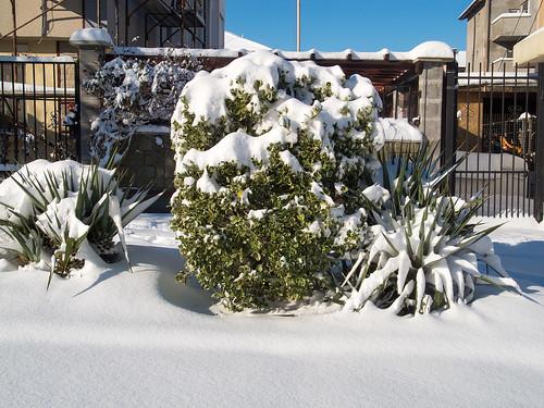 Green under snow ©  Andrey