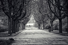 On the way.. (frata60) Tags: nikon netherlands nederland nikkor 1685mm vr zwartwit zw fietsen trees tree road weg landscape landschap
