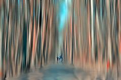 """It happens like this.... (eggii) Tags: walk forest spring łagiewniki arturówek lodz nikon eggii d90"