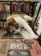 Lima - Librería El Virrey (Santiago Stucchi Portocarrero) Tags: miraflores lima perú santiagostucchiportocarrero cat gatto katzen chat elvirrey gato