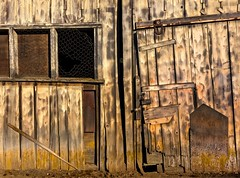 Fruit Valley Shed 2645 D (jim.choate59) Tags: decay rural ruraldecay shed barn abandoned jchoate chickenwire wood weatheredwood mthoodoregon fruitvalley hww on1pics