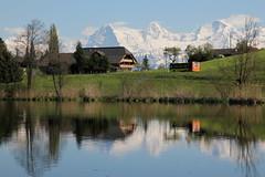 Dittligsee ( BE - 652 m - See Seelein lac lake lago ) in Dittligen bei Forst - Lägenbühl im oberen Gürbetal im Berner Mittelland im Kanton Bern der Schweiz (chrchr_75) Tags: hurni christoph chrchr chrchr75 chrigu chriguhurni april 2017 hurni170421 kantonbern schweiz suisse switzerland svizzera suissa swiss albumdreigestirneigermönchjungfrau dreigestirn eiger mönch jungfrau alpen alps berg mountain montagne albumjungfrau viertausender montagna berner oberland bergeiger albumeiger
