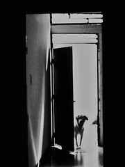 (Aaron Montilla) Tags: aaronmontilla 2017revisted 2008 blackwhite backlight dog door light shadows reflection reflex sidewalk indoors documentaryphoto streetphotography greyhound avecofa monochrome canon powershot a720is powershotseries iso80 1160 blancoynegro contraluz perro puerta luz sombras destellos reflejo pasillo interiores fotografiadocumental fotografiacallejera grandanes monocromo