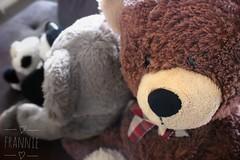 I like taking random photos since I'm a beginner and doesn't have enough models, (reighfranzbiacolo) Tags: bear teddy teddybear stuffedtoy toy focus