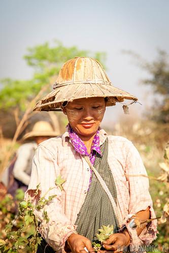 Twarze Birmy