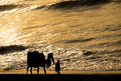 A Journey..... [Explored] (pallab seth) Tags: camel rider silhouette morning sunrise odisha puri bayofbengal india waves samsungnx300m samsung16mmf24ifunctionlens wave orissa 2016