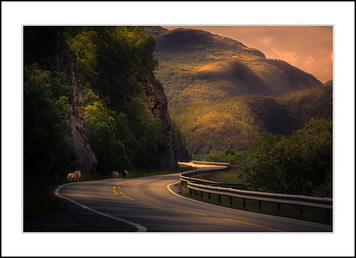 Sheeps (andreassofus) Tags: sheeps norway mountains mountainscapes road light sunset sky travel travelphotography summer summertime nature animal outdoor