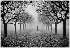 Scared to be lonely (Petricor Photography) Tags: numb numbness fog milan italy italian blackandwhite winter cold clouds cloudy