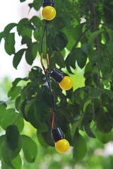 Strange fruit (Roving I) Tags: lights lighting lightbulbs promotion trees cafes coffeeshops danang vertical vietnam